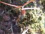 アワコバイモ昨年球根を土手に埋め込んでおいた。